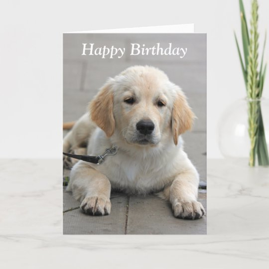 Golden Retriever Puppy Cute Photo Birthday Card Zazzlecom