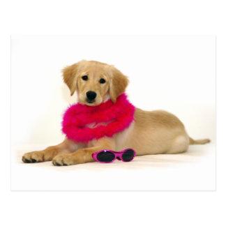 Golden Retriever Puppy Diva Postcard