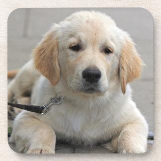 Golden Retriever puppy dog beautiful cute photo Beverage Coaster
