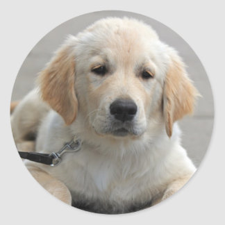 Golden Retriever puppy dog beautiful cute photo Classic Round Sticker
