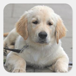 Golden Retriever puppy dog beautiful cute photo Square Sticker