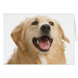 Golden Retriever Puppy Dog Blank Greeting Notecard