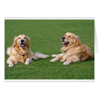 Golden Retriever Puppy Dog Blank Stationery Note Card