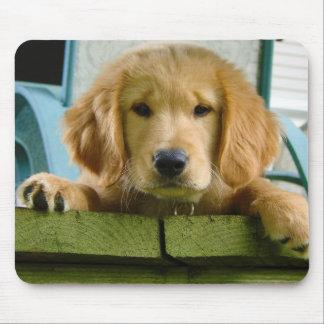 Golden Retriever Puppy Dog Canis Lupus Familiaris Mousepads