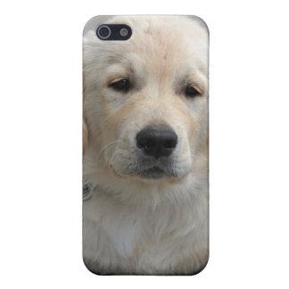 Golden Retriever puppy dog cute beautiful photo Case For iPhone SE/5/5s