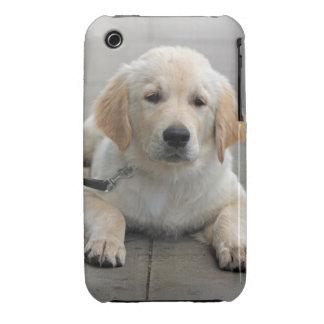 Golden Retriever puppy dog cute beautiful photo iPhone 3 Case-Mate Case