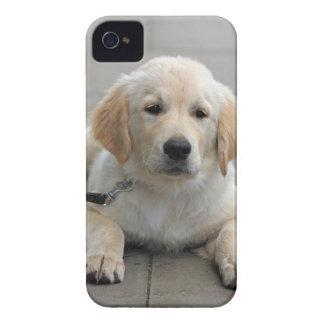 Golden Retriever puppy dog cute beautiful photo iPhone 4 Case