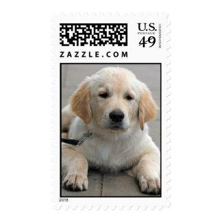 Golden Retriever puppy dog cute photo postage