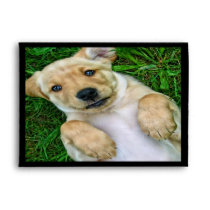 Golden Retriever Puppy Dog Envelopes