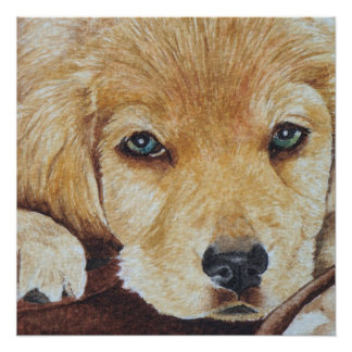 golden retriever puppy dog full face realist art poster