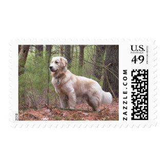 Golden Retriever Puppy Dog Postage Stamps