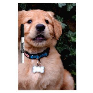 Golden Retriever Puppy Dry-Erase Board