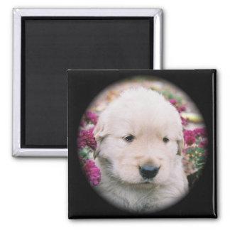 Golden Retriever Puppy & Flowers Square Magnet