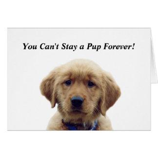 Golden Retriever Puppy Graduation Card