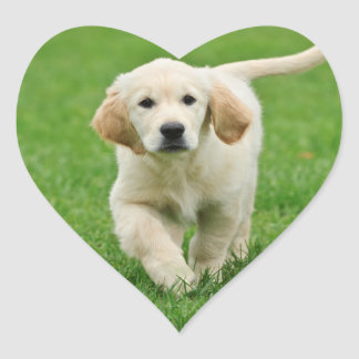 Golden retriever puppy heart sticker