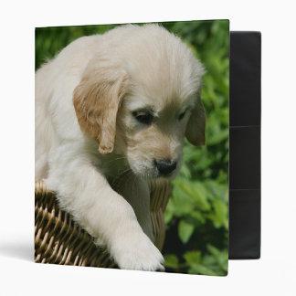 Golden Retriever Puppy in Basket 3 Ring Binder