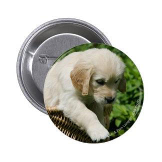 Golden Retriever Puppy in Basket Button