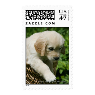 Golden Retriever Puppy in Basket Postage