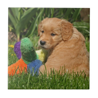 Golden retriever puppy in the grass with toy ceramic tile