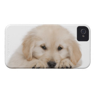 Golden retriever puppy iPhone 4 cover