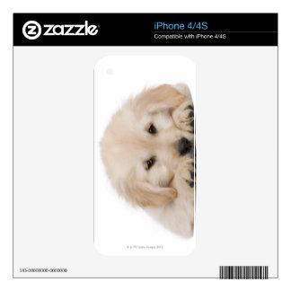 Golden retriever puppy iPhone 4S decals