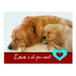 Golden Retriever Puppy Love Postcard