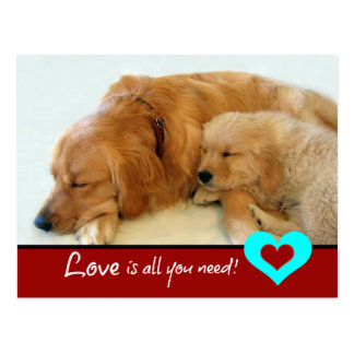 Golden Retriever Puppy Love Post Card