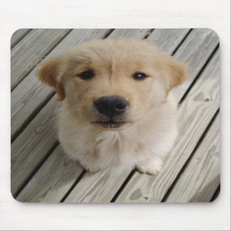 Golden retriever puppy mousepad