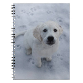 Golden Retriever Puppy Notepad Notebooks