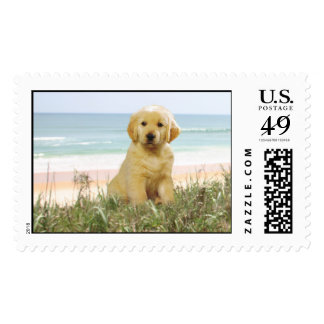 Golden Retriever Puppy On Beach Postage