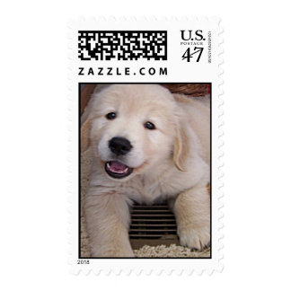 Golden Retriever Puppy Postage