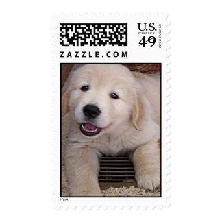 Golden Retriever Puppy Postage Stamp