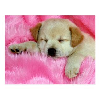 Golden Retriever Puppy Postcard