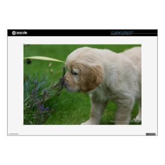 """Golden Retriever Puppy 15"""" Laptop Decals"""