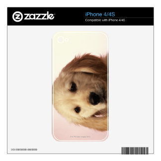 Golden Retriever Puppy Skins For iPhone 4S