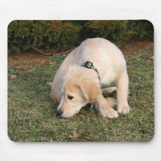 Golden Retriever Puppy Sniffing Mouse Pad