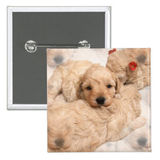Golden Retriever Puppy Square Pin
