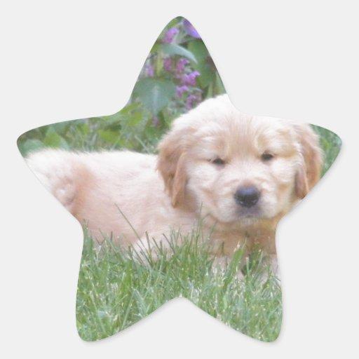 Golden Retriever Puppy Star Sticker