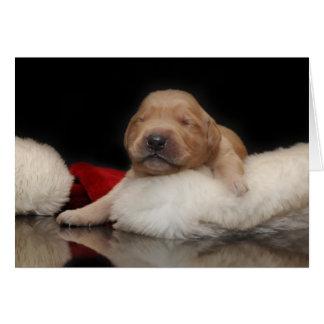 Golden Retriever Puppy & Stocking Greeting Cards