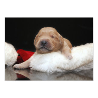 Golden Retriever Puppy & Stocking Holiday Card Personalized Announcement