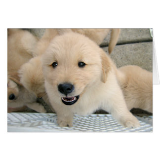 Golden Retriever Puppy Therapy Get Well Card