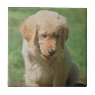 Golden Retriever Puppy Tile