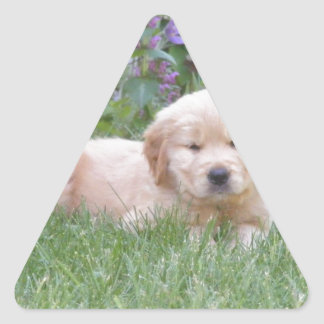 Golden Retriever Puppy Triangle Sticker