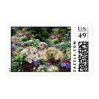 Golden Retriever Pups In Garden Postage Stamp