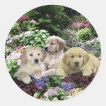Golden Retriever Pups In Garden Sticker