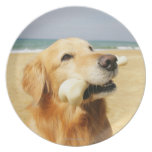 Golden retriever que come el hueso plato de comida