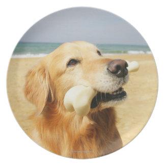 Golden retriever que come el hueso platos