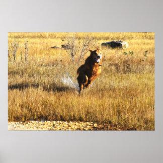 Golden retriever que corre a casa impresiones
