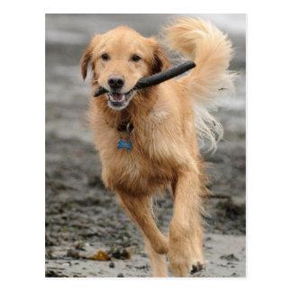Golden retriever que corre con el palillo en boca postal