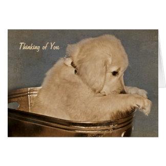 Golden retriever que piensa en usted tarjeta de felicitación